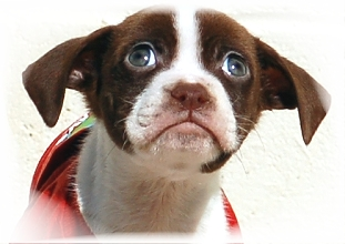 about_toccoa_stephens_humane_animal_shelter