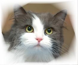 about_toccoa_stephens_humane_animal_shelter2