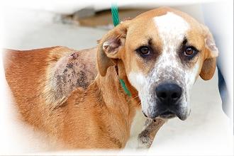 adopted_pet_dog
