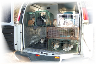 Cat Rescue Jan 6 2014