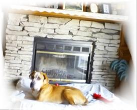 pet_dog_adoption_hero